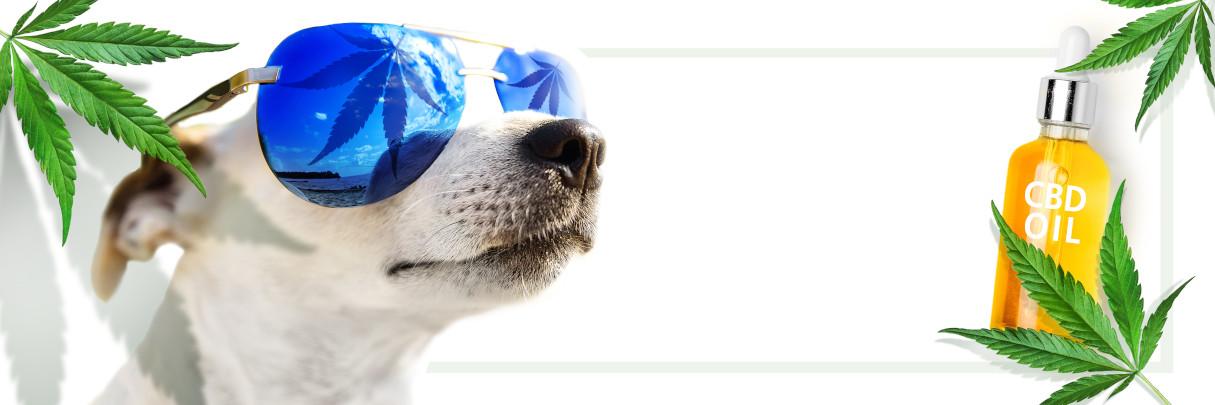 gezondheid hond CBD